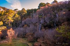 [ #184 :: 2017 ] (Salva Mira) Tags: riocuervo conca cuenca natura nature bosc bosque forrest salva salvamira salvadormira