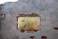Window (yrayagómezpérez) Tags: window ventana antiguo suciedad retro campo prado ladrillos abandonado casa home domus rojo red blanco plantas artificial roto break human humanidad natura naturaleza