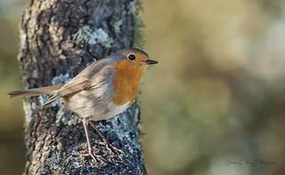 Robin (DSC_0118)