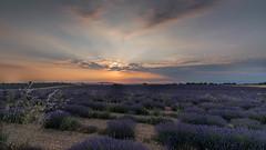 Coucher de soleil sur le plateau de Valensole - Alpes de haute Provence (pascal548) Tags: lavande nuit plateaudevalensole ciel valensole alpesdehauteprovence france