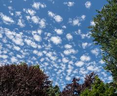 Cotton wool Clouds! (Nanooki ʕ•́ᴥ•̀ʔっ) Tags: sky blue unusual sussex cumulushumilis clouds
