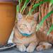 Spot-the-kitteh! 😸