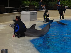 DSC00609 (jrucker94) Tags: vegas water dolphin swimming show secretgarden
