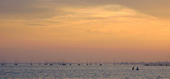 The Audience (SteveJM2009) Tags: poole harbour sandbanks sunset tide sea light colour dorset uk june 2017 stevemaskell explored