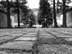 (Fede Z.) Tags: blackandwhite bw biancoenero trento street starda sanpietrini città city summer estate