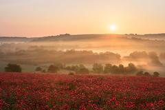 Upavon Poppies (Stu Meech) Tags: poppies poppy field sunrise mist upavon wiltshire nikon d750 24120 stu meech