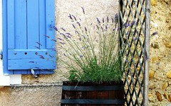 La Provenza ... (Augusta Onida) Tags: provenza francia finestra window lavanda lavender fiore flower gourdon