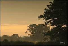 A Steamy Summer Morning. Part 4. (Picture post.) Tags: landscape nature green summertime mist trees sheep sunrise clouds humidity paysage arbre vista