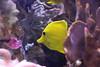 水族館2 (ののリサを信じろ) Tags: 水族館 白熊 カエル 蛙 シロクマ なまはげ 獅子舞 神社 桜 鯉のぼり アシカ
