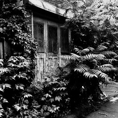 Se sentir au bout du monde sans bouger... (woltarise) Tags: ruelle montréal garage arbustes végétation plateau