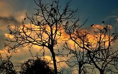 uma fria tarde de inverno... através da (minha) janela! (Ruby Ferreira ®) Tags: silhouettes silhuetas sunset pôrdosol trees árvores branches window janela home