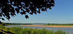 RIVER SEVERN (chris .p) Tags: gloucestershire river severn nikon d610 view summer 2017 tree leaves capture uk june water riversevern shadows