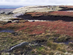 Super Natural (Gram Joel Davies (see ablums)) Tags: landscape colour moor yorkshire kinderscout grass peat earth peakdistrict derbyshire