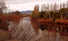 MOODY WINTER REFLECTIONS (Lani Elliott) Tags: nature naturephotography lanielliott trees river winter water reflection reflections moody wintercolours color colour colourful serene peaceful derwentriver riverderwent derwentvalley scene scenic scenictasmania australia tasmania gorgeous