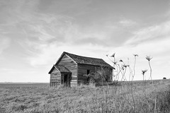 dancing with the Queen (David Sebben) Tags: oneroom schoolhouse floyd iowa queenannelace weed ditch infrared education rural