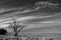 Tree on the hill (StephenM @mozzasnaps) Tags: tree lone lonetree bnw monochrome