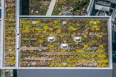 Gardeners (Aerial Photography) Tags: by la ndb 06072005 20d14596 arbeiter ccl dach dachbegrünung flachdach fotoklausleidorfwwwleidorfde kino landshut luftaufnahme luftbild menschen rechteck aerial cinema outdoor people roof bayernbavaria deutschlandgermany deu