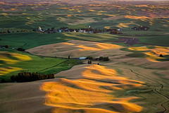 Golden eve (P Matthews) Tags: palouse steptoebutte rollinghills farm washington sunset wheatfields