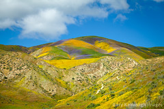 Vibrant flower covered hills below Mckittrick Summit, Carrizo Pl (Gary Rides Bikes) Tags: california carrizoplain carrizoplainnationalmonument mckittricksummit northamerica sanluisobispocounty springtime temblorrange usa beautyinnature goldcolored idyllic inbloom landscape mountainridge nature nopeople plain remote scenicsnature vibrantcolor yellow
