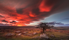 Out on the Wiley, Windy Moors... (Jerry Fryer) Tags: dartmoor combestonetor devon landscape trees hawthorn sunset view canon 5dmk2