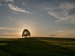 Sonnenuntergang (Ina Hain) Tags: olympusm17mmf18 olympusem5markii gras schatten sky himmel weite natur nature olympus wiese bavaria bayern ruhe licht baum sommer sun sonne sonnenuntergang
