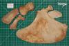 Risso's dolphin scapula (JRochester) Tags: rissos dolphin nms scapula grampus griseus humerus radius ulna
