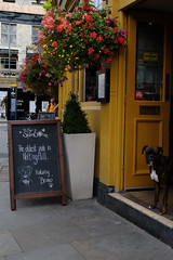 bruno (bilgesenaozturk) Tags: uk london england nottinghill portobello road bruno dog chalkboard oldest pub yellow flowers