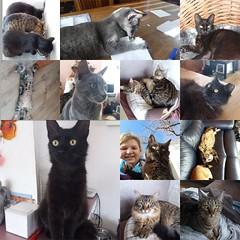 Luca, Tiger, Pip, Devil & Deka - The Netherlands