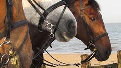 Trio (debra.hall88) Tags: frintononsea essex beach horses