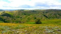 Tea land 3 (erdilseali) Tags: tea landscape land sun sunny day clouds geotagged nacional park