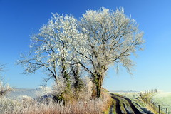 Standing Out (Worthing Wanderer) Tags: sussex westsussex arunvalley arundel arundelpark winter frosty sunny december