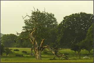 Dead Wood...