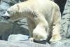 水族館20 (ののリサを信じろ) Tags: 水族館 白熊 カエル 蛙 シロクマ なまはげ 獅子舞 神社 桜 鯉のぼり アシカ