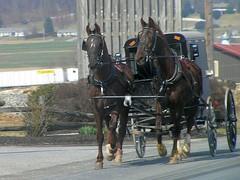 05 Amish Buggy (megatti) Tags: amish buggy farm horses lancaster pa pennsylvania silos