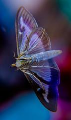 DSCF0941-2 (bc-schulte) Tags: xt20 fujinon 1650mm polaroid nahlinse 4 macro insekt motte