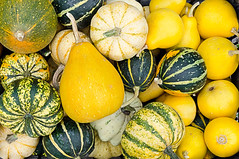 Farm to institution photo (Farm to Institution New England) Tags: environmentalconservation groupofobjects rustic gourmet singleobject collection ornate organic colorimage marrowsquash gourd pumpkin harvesting backgrounds abundance freshness variation yellow pattern agriculture nature ruralscene fruit vegetable ripe crop autumn season decoration thanksgiving halloween food decor october