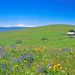 Dalles Mountain Ranch 1051 C thumbnail