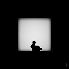 Shadow (364/100) - Rabbit (Ballou34) Tags: 2017 7dmark2 7dmarkii 7d2 7dii afol ballou34 canon canon7dmarkii canon7dii eos eos7dmarkii eos7d2 eos7dii flickr lego legographer legography minifigures photography stuckinplastic toy toyphotography toys 7d mark 2 ii eos7d stuck plastic courbevoie îledefrance france fr nanterre puteaux blackwhite light shadow photgraphy enevucube minifigure 100shadow collectible series 17 animal rabbit