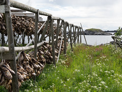 NB-301.jpg (neil.bulman) Tags: norway racks cruise scandanavia lefoten thomson drying landofthemidnightsun fish leknes thomsoncelebration nordland no