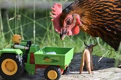 Huhn mit Playmobil (mechanicalArts) Tags: chicken huhn hen henne