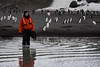 Debbie among the Chinstrap Penguins, Bailey Head, Antarctica (Scott Ableman) Tags: shetlandislands baileyhead chinstrappenguins chinstrappenguin chinstrap penguin nationalgeographicexpeditions lindbladexpeditions nationalgeographicorion antarctica parkas orange orangeparka