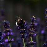 Gartenbilder Juli 2017 thumbnail