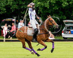 © 2017 Photographs by Robert Piper- All Rights Reserved 692 _ (Ham Polo Club) Tags: jacaranda challengematch vendetta 2017the london polo club tw107ah england gbr