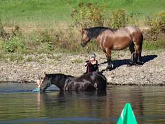 A woman is cuddling with her horse (Bambizoe) Tags: irishdraught irlandatirĉevalo traitirlandais irlannintyöhevonen irishdraughthorse labe elba एल्ब έλβασ elben elbe ríoelba elbefleuve elbafolyó saxelfur elbafiume エルベ川 ელბა 엘베강 albis एल्बनदी râulelba эльбарека łaba 易北河