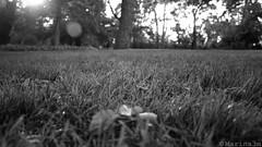 Parque del Capricho (Marina.3m) Tags: blancoynegro parque contrastealto puestadesol ocaso goldenhour highcontrast park countryside twinlight blackandwhite bw parquedelcapricho parqueelcapricho capricho madrid españa spain tourism turismo artisticphotography fotografíaartística