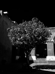 Lone tree in the courtyard (finlaymackenzie) Tags: nature blackandwhitetree onetree one lone bwtree lovely beautiful blackandwhite white black bw courtyard trees tree