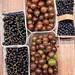Stachelbeeren und schwarze Johannisbeeren
