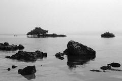 The fog rolls in (Bruce Buckman) Tags: manukau amburyregionalpark auckland newzealand seascape 35mmfilm film bw fujineopanacros100 canoneos30 sea fog