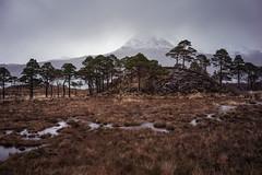 Crest (jellyfire) Tags: bendamph bendamphestate distagont3518 elgol february highlands landscape landscapephotography rain scotland sony sonya7r torridon winter ze zeissdistagont18mmf35ze grass leeacaster pines trees wwwleeacastercom zeiss