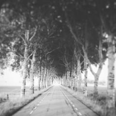 It's the end of the road | het is het einde van de weg (maike.manon) Tags: blackandwhite zwartenwit black white zwart wit road weg